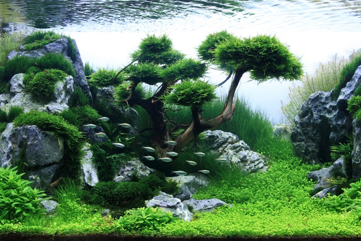 [More], AQUASCAPING BLOG