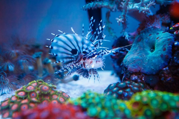 Nano Corals : Pet Habitat in South Africa for Online Pet Supplies, Guinea Pig Food ...