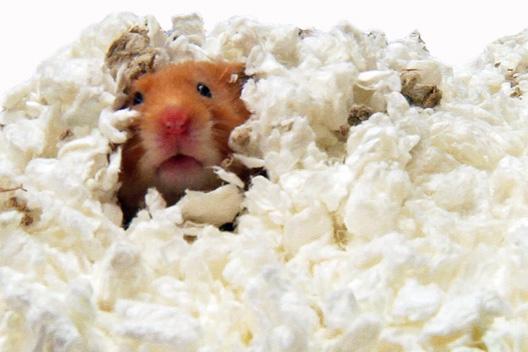 custom loading bedding is itm liter hamster bed image gerbil carefresh s natural