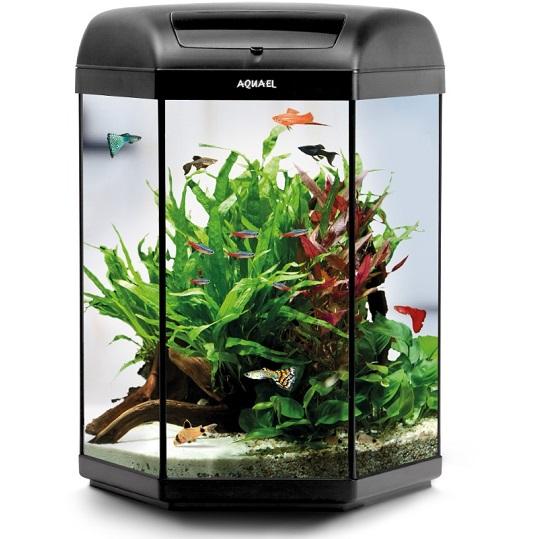 Study Room With Aquarium: Aquael Hexa Set 20