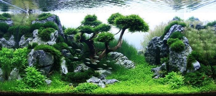 Although The Primary Aim Of Aquascaping Is To Create An Artful Underwater  Landscape, The Technical Aspects Of Aquatic Plant Maintenance Must Also Be  Taken ...