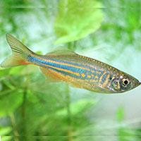 Small aquarium catfish species 1000 aquarium ideas for Types of small fish