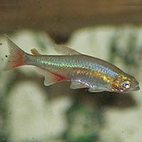 Pet habitat south africa for Cold water fish tanks