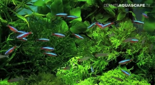 High Quality Aquascaping: Plants