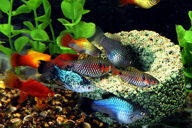 Pet habitat south africa for What are cold water fish