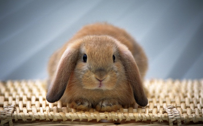Chinchilla For Sale >> Pet Habitat South Africa